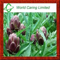China Natural Extract Artichoke Extract/CAS.NO.:30964-13-7 Cynarin 2.5%-5% for liver protecting wholesale