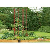 Metal Garden Tomato Plant Stakes