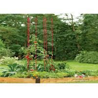 China Metal Garden Tomato Plant Stakes  Pack size  L73 Pack size  h 36 Tall or Towering, You Need Our Ladder Trellis wholesale