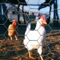 China Chicken Wire Netting| 25mm Opening Hole Wire Mesh Customized Size for Poultry House on sale