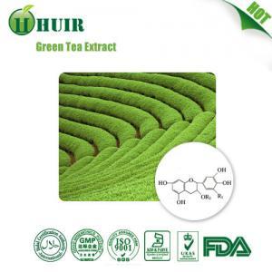 China Decaffeinated Green Tea Leaf Extract ,25%~98% Tea polyphenol,caffein wholesale