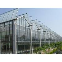 China Simple Constructure Commercial Glass Greenhouse With Galvanized Steel Screws / Bolts wholesale