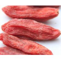 China Natural Goji Berry / Barbary Wolfberry Fruit / Lycium Berry Ningxia Dried Fruit wholesale
