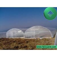 Single Tunnel Greenhouse, Tunnel Film Greenhouse