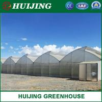 China Hot Dip Galvanized Steel Pipe Multi-span / Single Span Film Agricultural Greenhouse / Green Houses wholesale