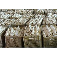 China Rhizoma Dioscoreae Fresh Chinese Herbal Medicines Yam For Spleen And Stomach wholesale