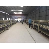 China Heavy Duty Gypsum Decorative Sheet Production Line 595x595 , 603x603 Size wholesale