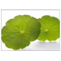 China Skin Scars Anti-aging Gotu Kola Leaf, Centella Asiatica Extract for Cosmetic industry wholesale