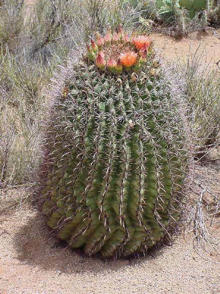 Large cactus indoor plants products for sale 1 20 large cactus indoor
