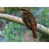 China Black Color Anti Bird Garden Mesh Netting  , Bird Proof Netting For Fruit Trees wholesale