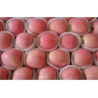 0.25 Kg 8cm Delicious Red Fuji Apple No Spots With Complete Body