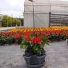 China Flowerpot (Lam-P-A) wholesale