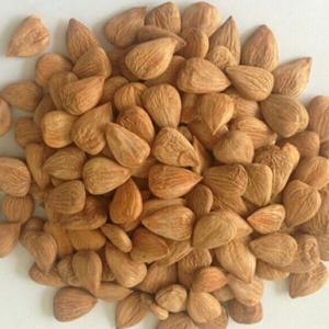China bitter apricot kernels wholesale