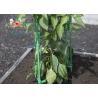 China Les accessoires d'usine de jardin de treillis de planteur de pot pliant l'usine de jardin en métal soutient des enjeux wholesale