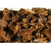 China Qianghuo Rhizoma et Radix Notopterygii Root Application  , Actions ,Properties wholesale