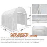 China Easy install greenhouse tomato single-span Plastic Film Green House,Low cost garden green houses for plating, PACKAGES wholesale