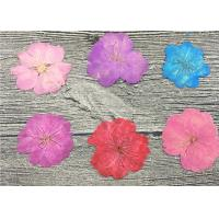 Pink Dried Cherry Blossom Flowers Ornaments For DIY Hand Work Greeting Cards