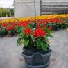 China Flower Pot Planter (LAM-P-A) wholesale