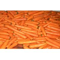 China Contains Minerals Fresh Organic Carrot Washed And Polished , Anti-Oxidants, Anti-cancer wholesale