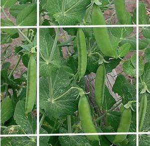 Buy cheap Ayuda sacada de la planta que pesca 8gsm para la granja, la flor o la haba de la from wholesalers