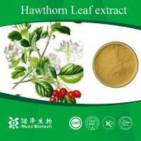 China Manufacturer sale healthy Hawthorn Leaves extract on sale