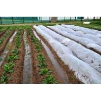 China Waterproof Agriculture Non Woven Fabric Roll 4% UV Treated Weed Control on sale