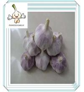 China china garlic price chinese garlic price Fresh red natural garlic on sale