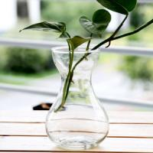 China Glass Vase for Hyacinth wholesale
