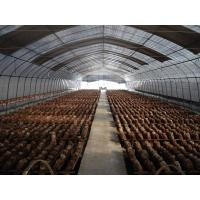 China Mushroom greenhouse wholesale