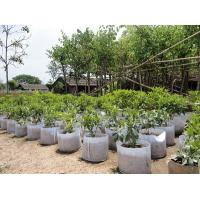 China Fashionable Design  Plant Grow Bags 0.1 - 3.5mm Thickness Optional Color wholesale