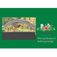Green Garden Shade Netting , Garden Sun Shade Cloth Protects Lettuce