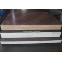 China Shuttering Plywood,Waterproof Film Faced Plywood,Film Faced Birch Plywood (1220x2440) wholesale