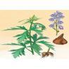 Natural Ligusticum Chuanxiong Hort Extract Ferulic Acid and Ligustilide for sale