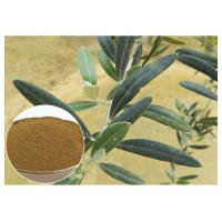China Anti Oxidation Natural Olive Leaf Extract Hydroxytyrosol 20% Solvent In Water wholesale