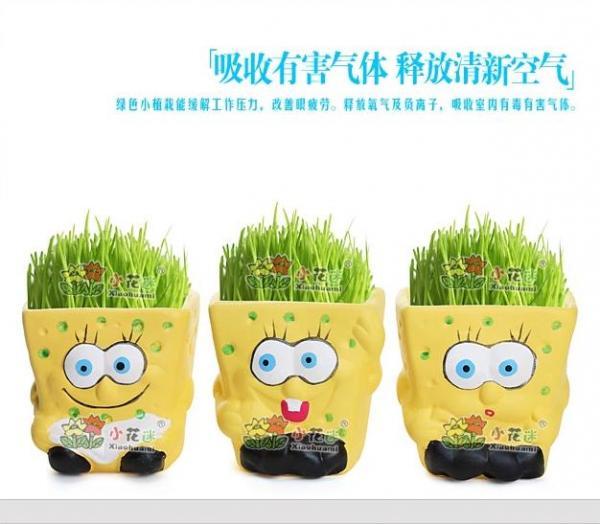 plant pot images