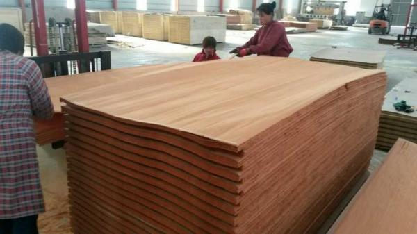Quality Face Veneer Commercial Plywood 1300mm X 2600mm with Smooth for sale