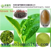 China Supplier Natural Green Tea Extract Polyphenols 20%,80%,98%/green tea extract export wholesale