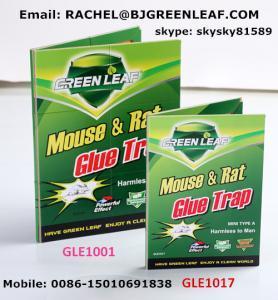 China Household Product Rat Mouse Glue Traps,Mouse Glue Trap  Email: rachel@bjgreenleaf.com wholesale