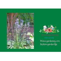 Adjustable Metal Garden Plant Supports With 3 Stakes And 2 Rings