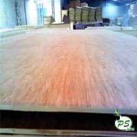 China BB/CC commercial bintangor plywood with red face for sale wholesale