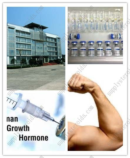Quality Jintropin HGH Human Growth Hormone Supplements Bodybuilding and Sex Enhancement for sale