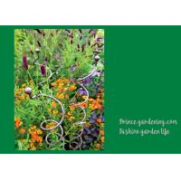 China Decorative Mental Garden Plant Stakes / Garden Support Stakes With 3 Spiral Stem wholesale