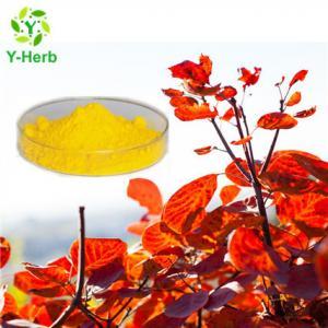 China 8% 50% 98% Pure Natural Smoketree Extract Fisetin wholesale
