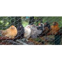 China Direct factory Hexagonal wire netting /chicken wire/ hexagonal wire mesh on sale