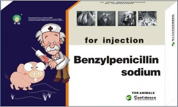 Lincocin Injection For Cats