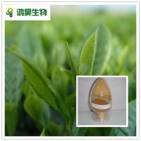 China 100% natural good quality Green tea extract with Catechin 30%-90% wholesale