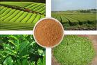 China Green tea extract benefits for human on sale