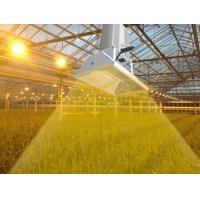 China High Reflectivity HID Grow Lights B281 , GrowBetter Grow Lights For Indoor Plants wholesale