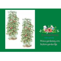 China Heavy Duty Metal Tomato Cages wholesale