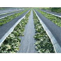 Buy cheap Geotextile Stabilization Fabric , PP Woven Geotextile Separation Fabric For Farm / Plants from wholesalers